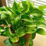 19 Loại cây trồng trong nhà tốt cho sức khỏe (LỌC KHÔNG KHÍ)