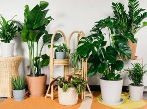 lưu ý khi lựa chọn loại cây trồng trong nhà